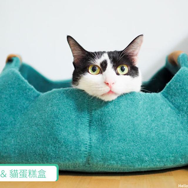 起乖家 - 兩個人五隻貓的懶散生活