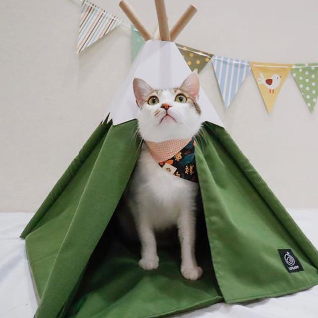 小貓山丘-捏捏補給站