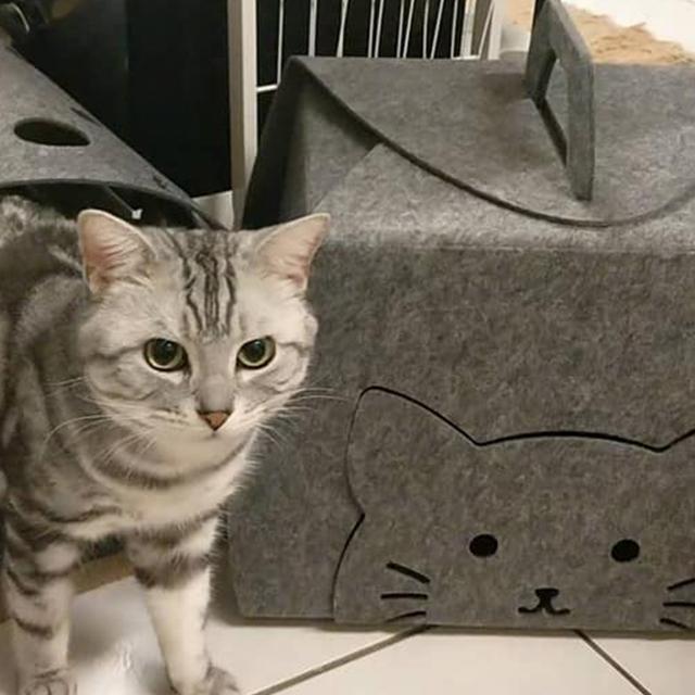 LIFEAPP貓蛋糕盒-男神酷比