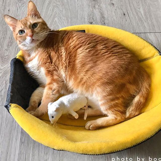 橘貓布布拉姆斯