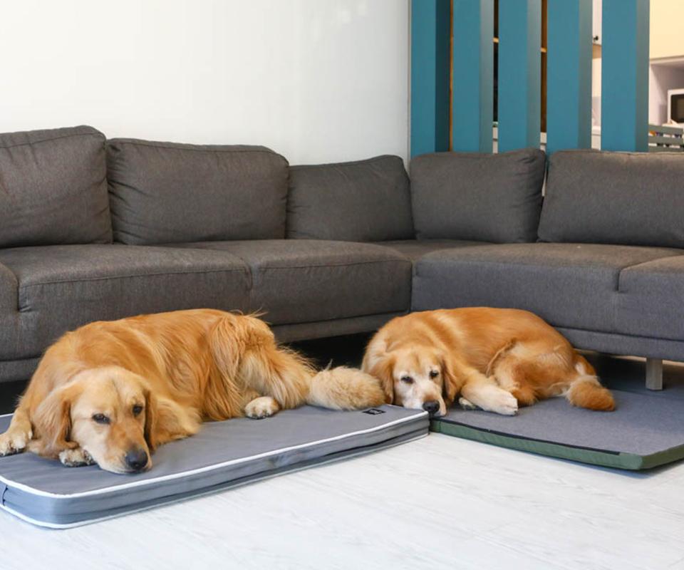 LIFEAPP經典透氣睡墊-洛基小聿媽x黃金獵犬吳洛基