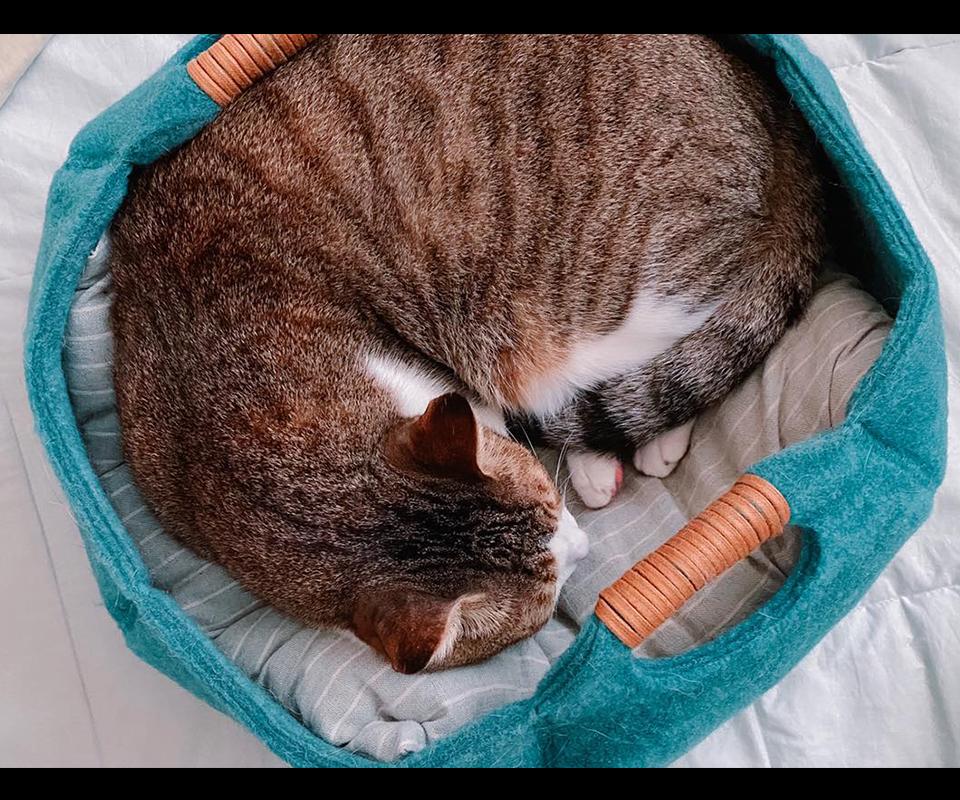 LIFEAPP貓籃子-有尾巴的柯基噗卡與嘎魯喵
