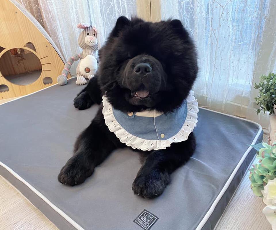 LIFEAPP經典透氣睡墊-ChowChow熊熊