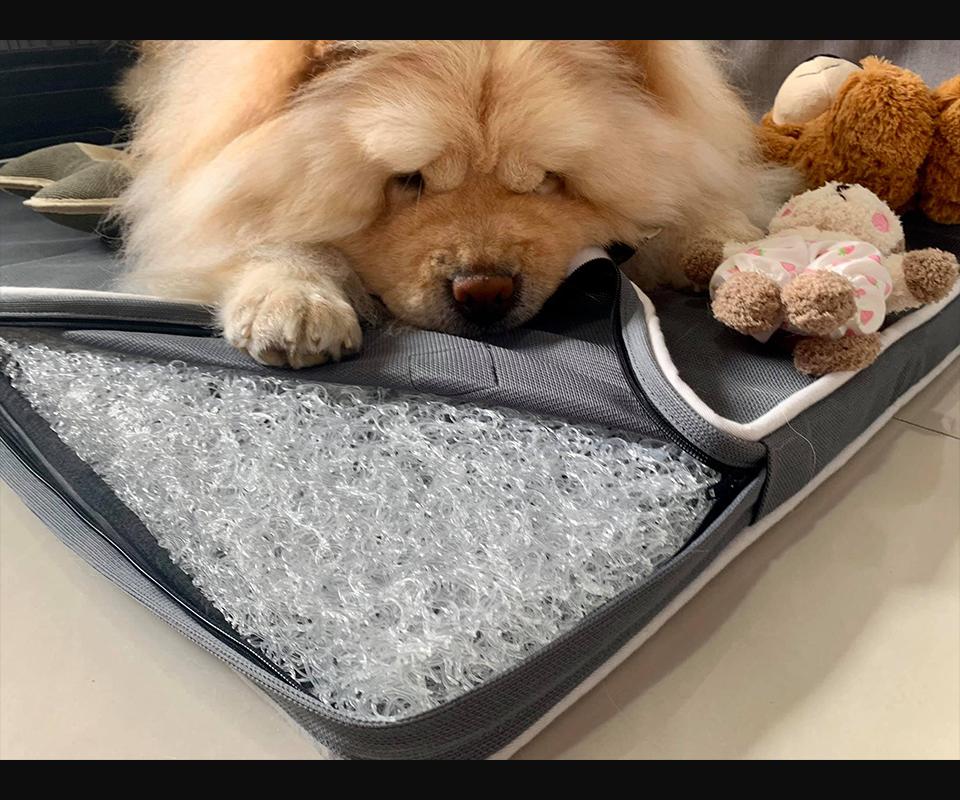 LIFEAPP經典透氣睡墊-Chowchow鬆獅犬珍奶