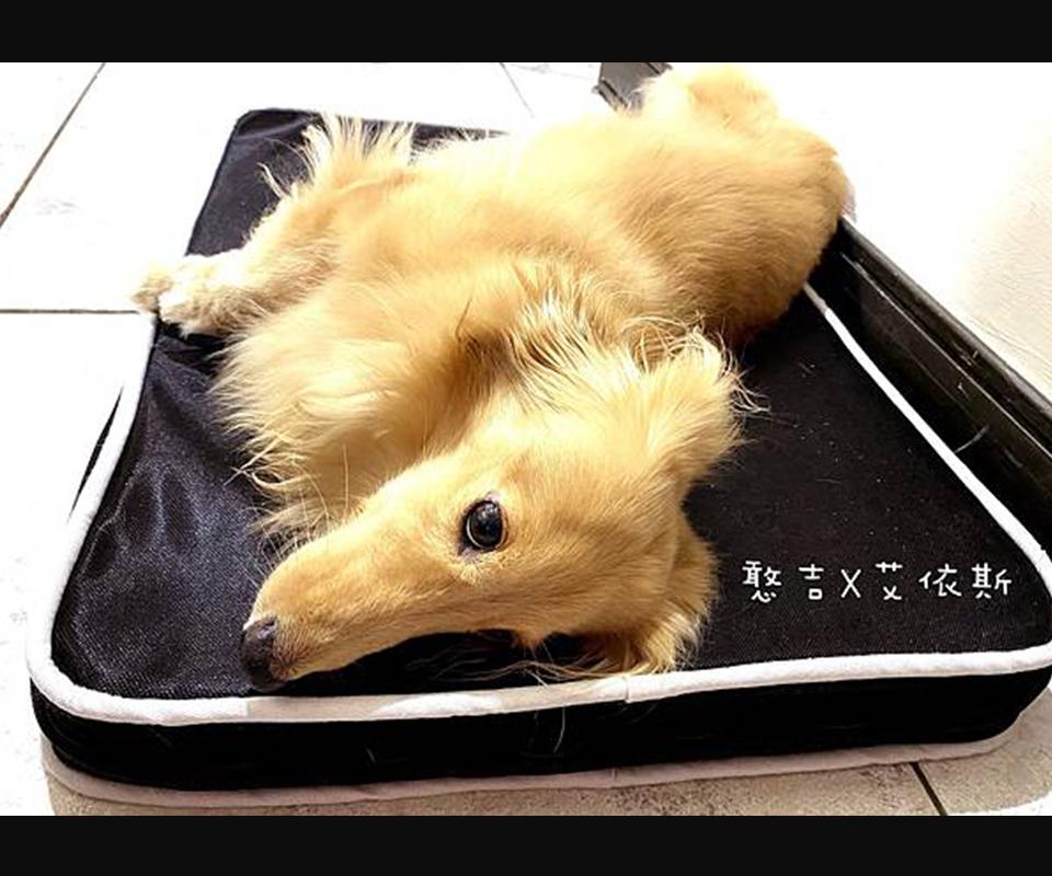 LIFEAPP經典透芯涼睡墊-臘腸狗狗 X 憨吉 X 想要去旅行