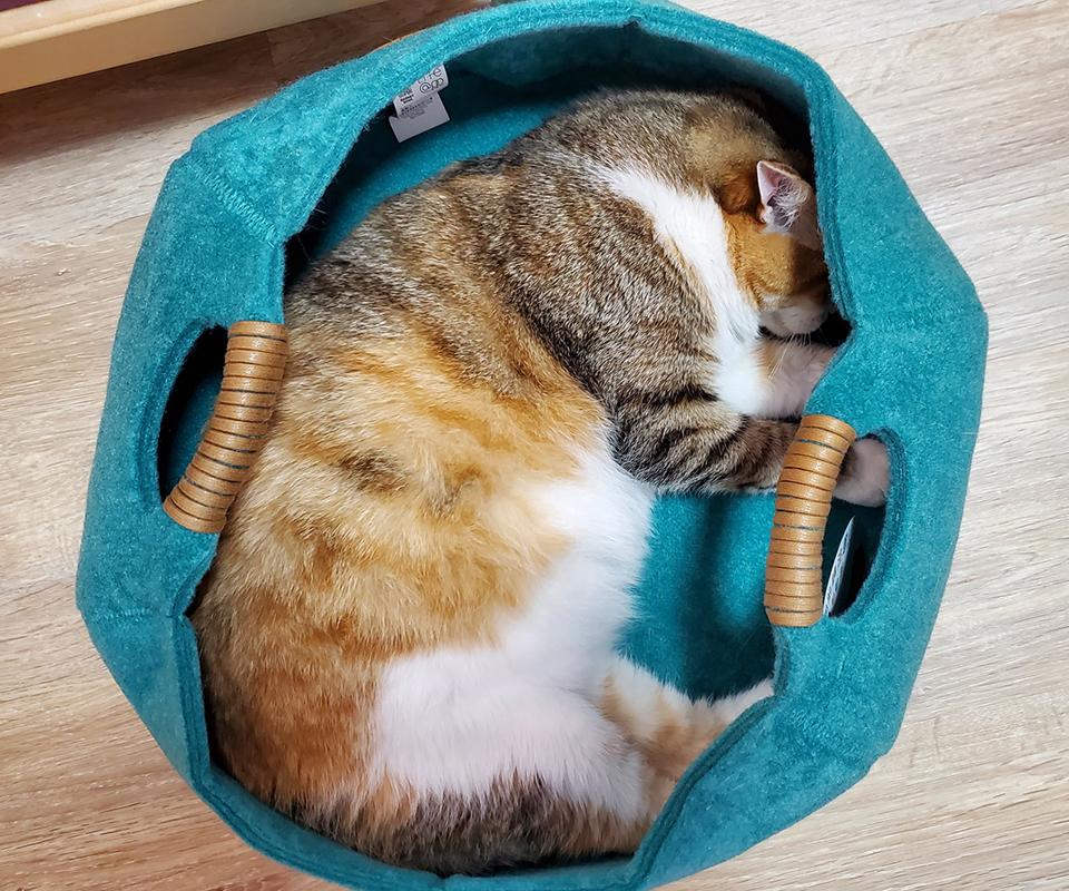 LIFEAPP貓籃子-肥肚肚啊肥