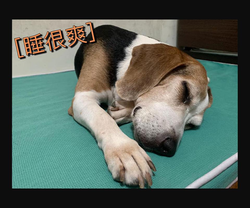 LIFEPP經典透氣睡墊-米格魯~蔡泡福~Puff