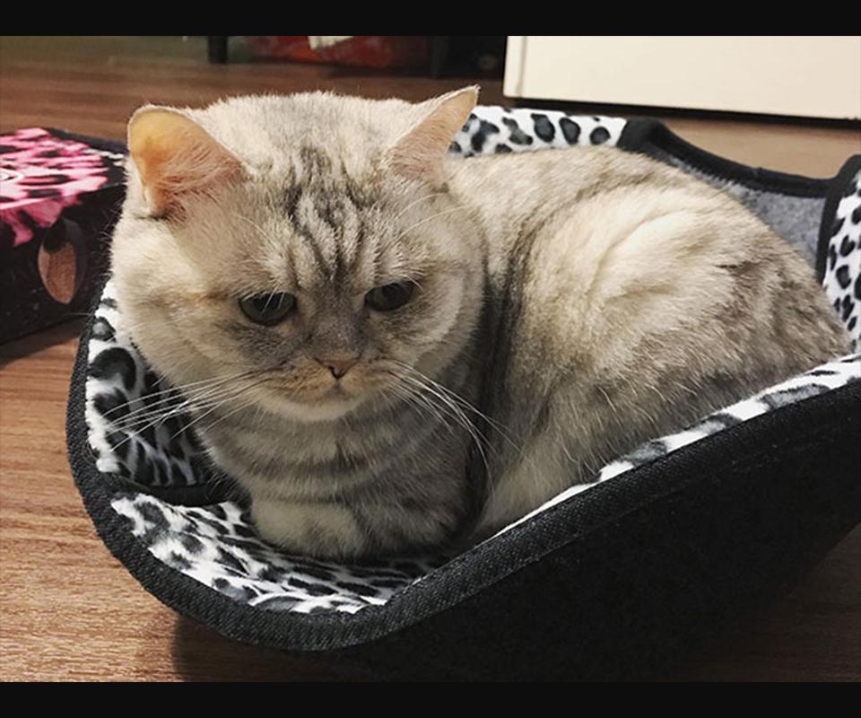 LIFEAPP寵愛貓窩-啵啵寶貝