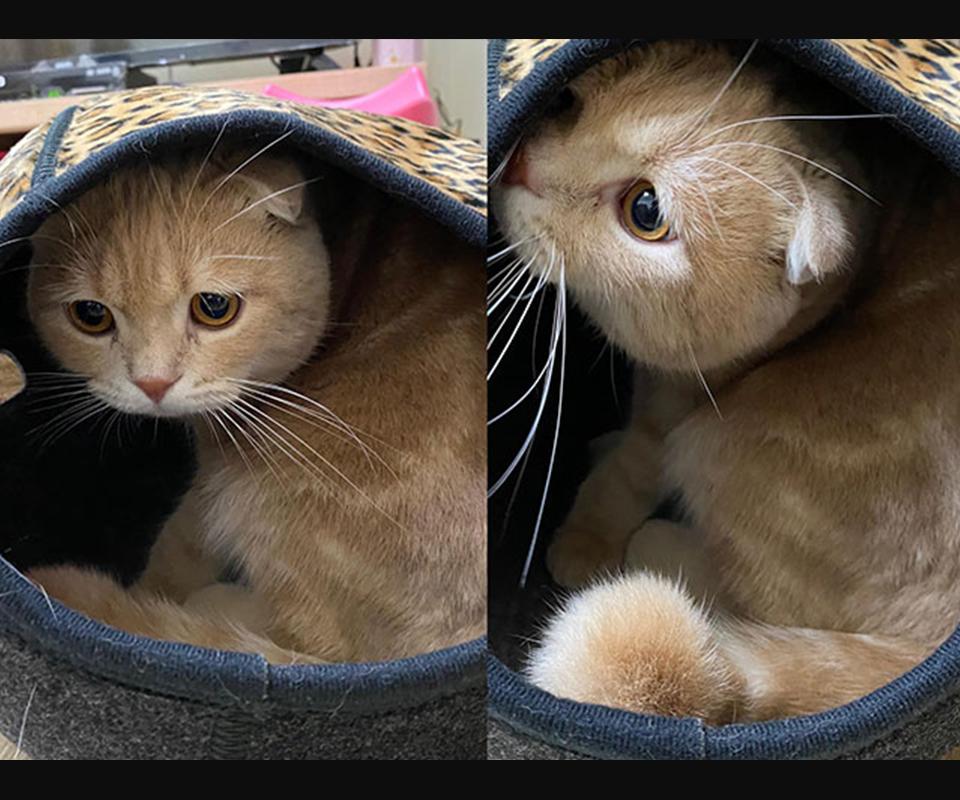 LIFEAPP寵愛貓窩-布南達與斗笠貓