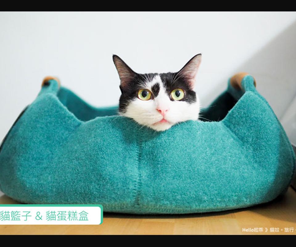 LIFEAPP貓籃子-起乖家-兩個人五隻貓的懶散生活