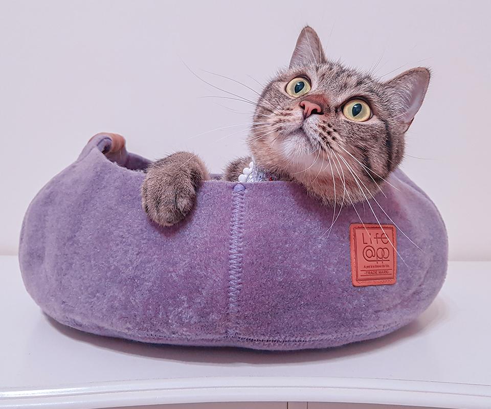 LIFEAPP迷你堡-傻眼貓米吉