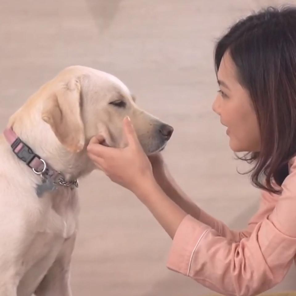LIFEAPP X 台灣導盲犬協會